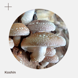 botao_koshin
